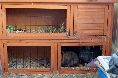 bunnies1