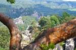 Wonderful Nature around the Bastei