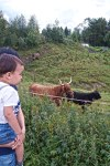 #Nathancuty and the Galloway cattle Part II